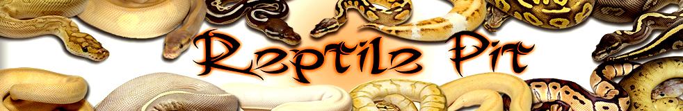 Reptile Pit