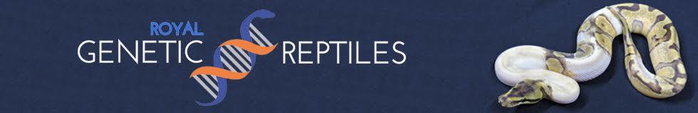 Royal Genetic Reptiles