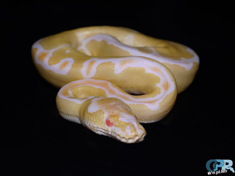Albino Clown