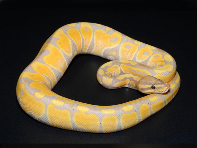 Banana Ball