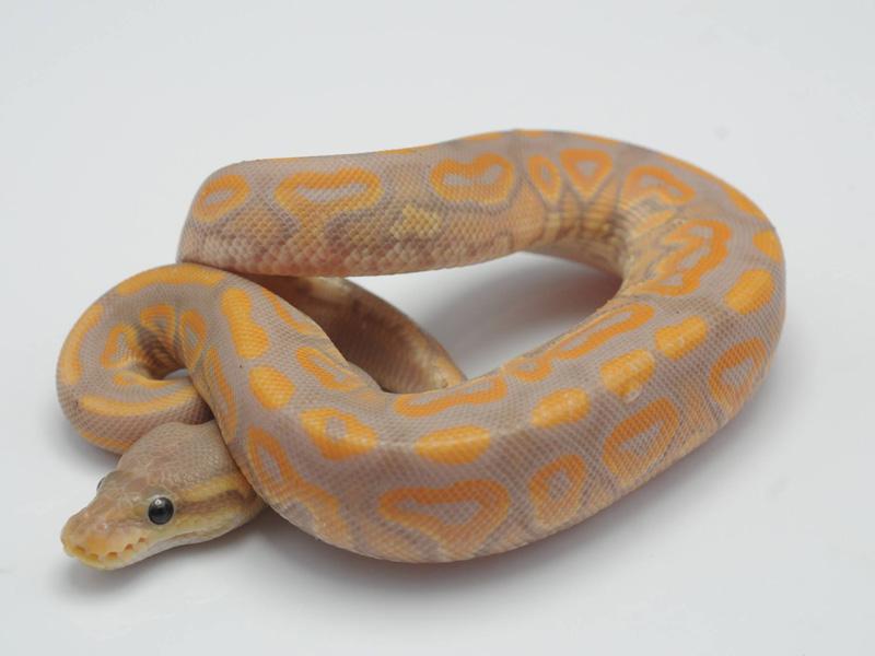 Banana Cinnamon