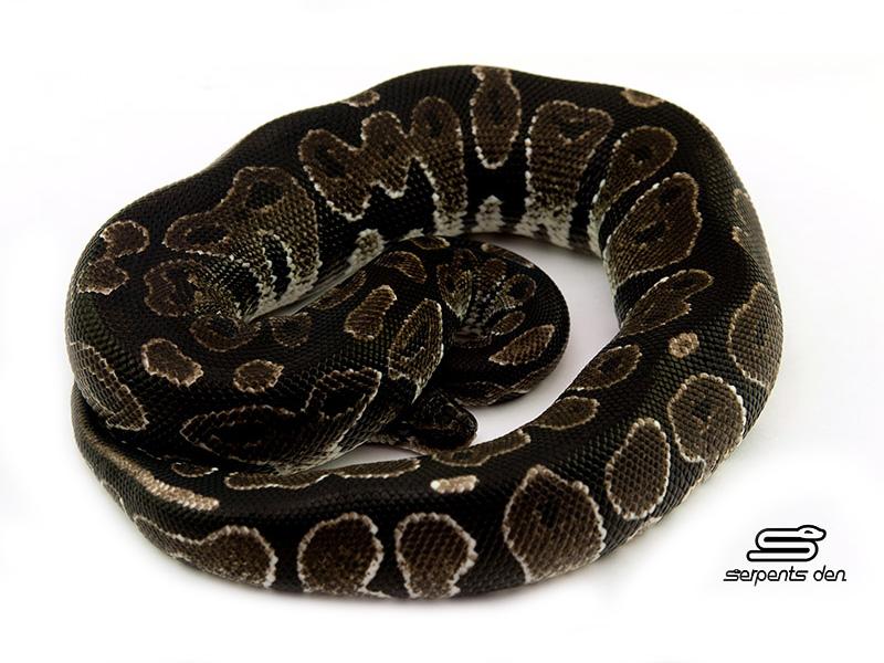 Black Axanthic