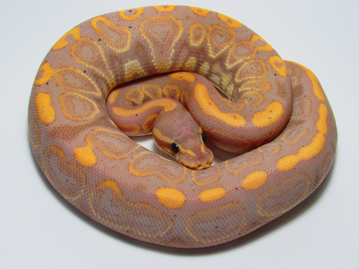 Black Pastel Banana