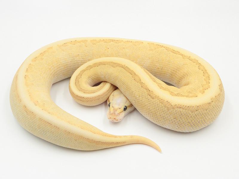Butter Fire Pastel Pinstripe Vanilla