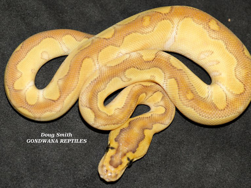 Enchi Butter Clown