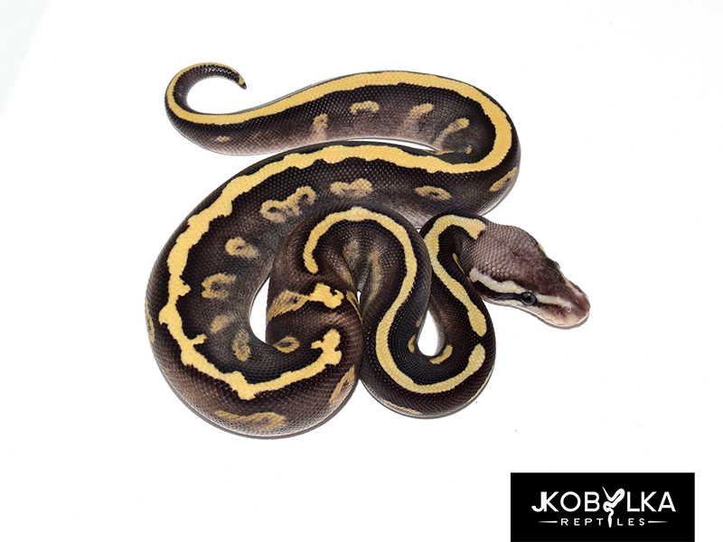 Fire Ghi Leopard Mojave Pastel