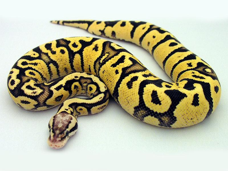 Python write