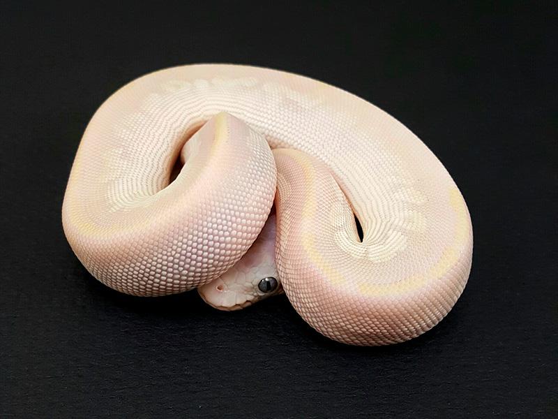 Mojave Pastel Phantom Vanilla