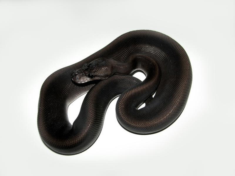 Super Black Pastel
