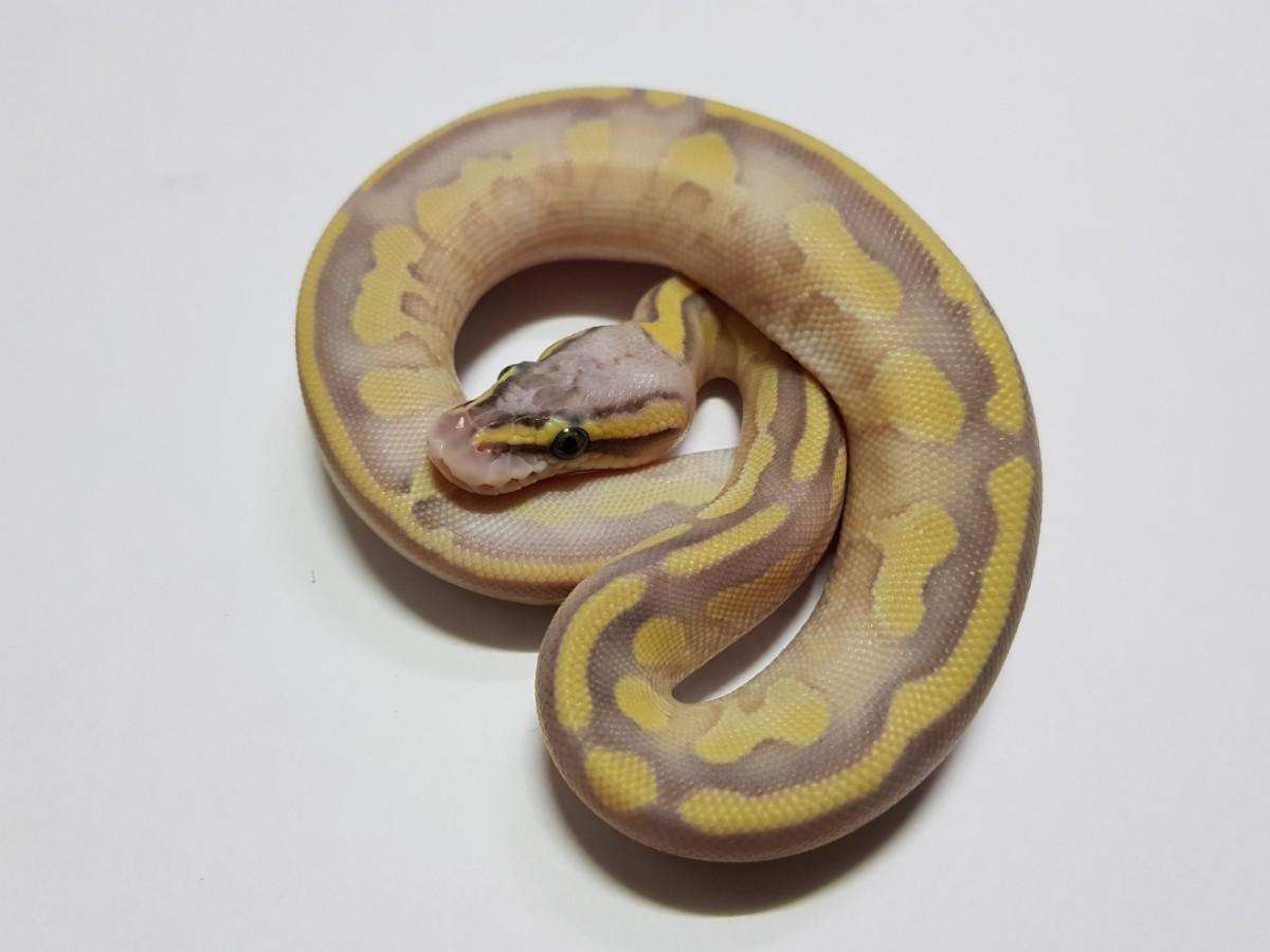 Super Pastel Butter Enchi