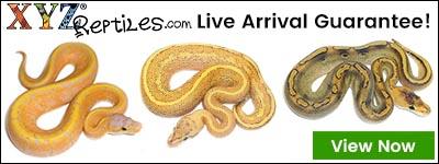 XYZ Reptiles