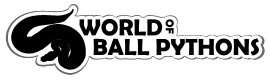 World of Ball Pythons